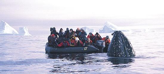 Hump Back Whale studia i fotografi