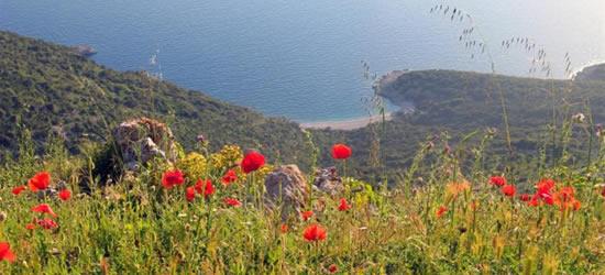 Papaveri, Isole Kornati