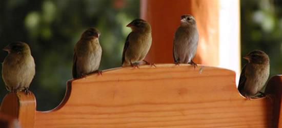 Riserva di uccelli, Seychelles