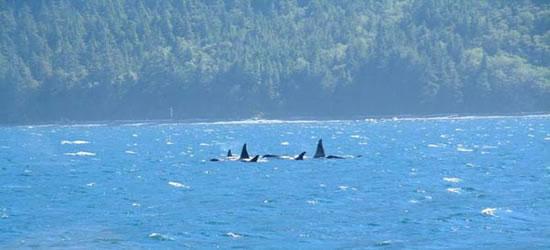 Stretto Johnstone di Orca, BC