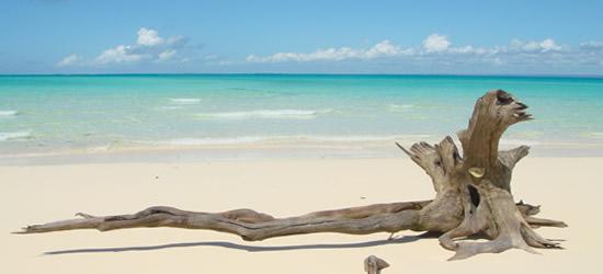Legno spiaggiato, Mozambico