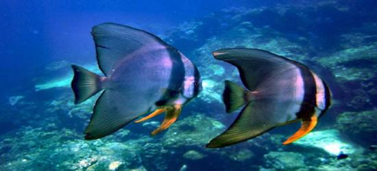 Vita marina davvero spettacolare
