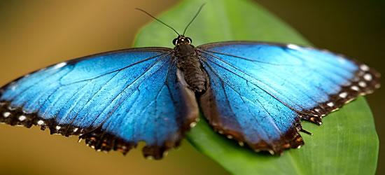 Casa delle farfalle, St Martin