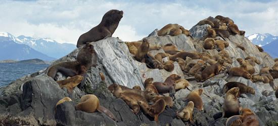Colonia di Lions Mare, Canale di Beagle