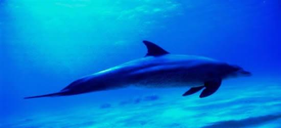 Un delfino locale