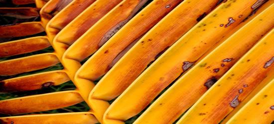 Palm Frond, BVI