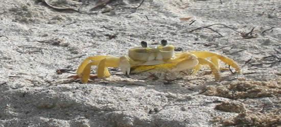 Granchio sulla sabbia