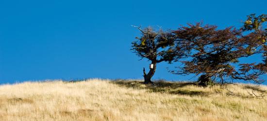 Autunno Patagonia, Tierra del Fuoco