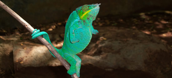 Immagini di Madagascar
