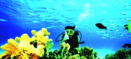 La barriera corallina