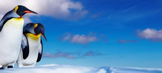 Pinguino Antartide