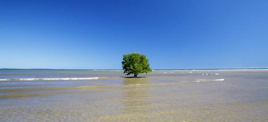 Albero di mangrovie, Nosy Be